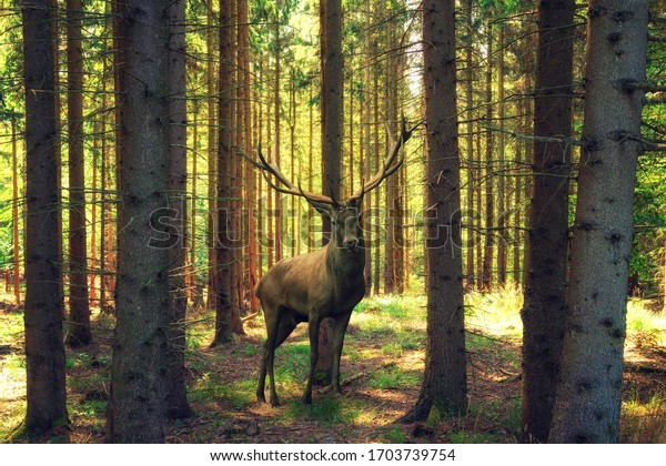 Large proud deer stands in the middle of the forest
