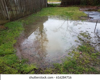 large puddle in lawn