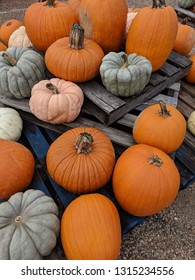 Large pumpkins of various colors and shapes including orange, pink, and gray arranged on pallet wood and gravel