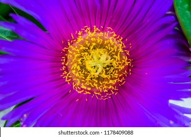 Purple flower with yellow center images stock photos vectors large purple flower with yellow center mightylinksfo