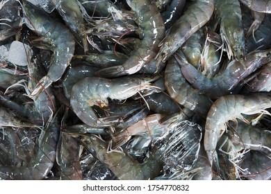 large raw shrimp on ice