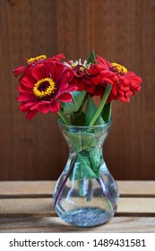 Large red Zinnia flowers in a clear vase. California Giant Zinnia flowers. Variety of red Zinnias. Clear vase.