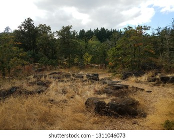 large rocks or boulders from cooled lava and brown grasses and trees in Oregon City, Oregon