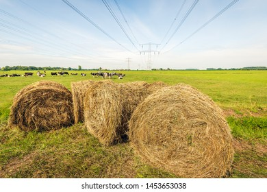Large rolls of dried grass in the foreground of an agricultural landscape in the Netherlands. In teh background cows are grazing under high voltage lines.