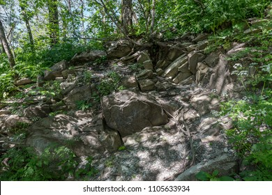 Large roots of trees in mountainous terrain are twisted among stones. The roots of trees growing on mountain slopes, Open roots of trees among rocks of rocks in struggle for life. wild nature