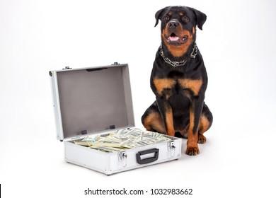 I Novelty DOBERMAN DOG MILLION DOLLAR BILL FAKE-MONEY Collectible