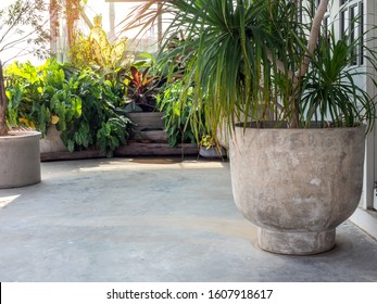 Large round concrete pot with  green leaves on cement floor near the green tropical garden with sunshine in the morning with copy space.