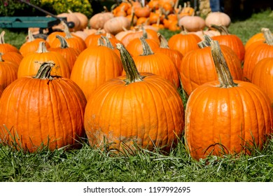 Large round orange carving pumpkins at an Indiana farmers market