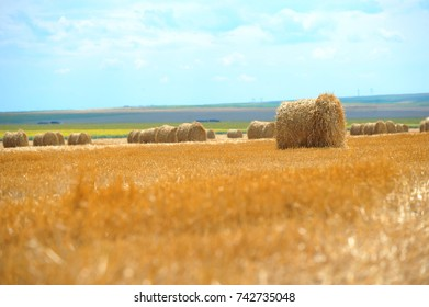 Large round straw bales on the field in a sunny day