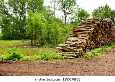 A large row of stacked Ash Tree trunks after removal because of the devastation caused by the Emerald Ash Borer.  The tree removal devastated the Wisconsin woods on the Root River Parkway in Racine.
