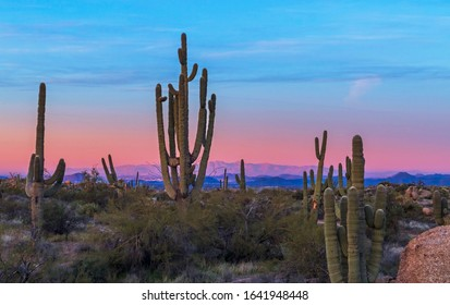 A Large Saguaro Cactus  with valley in early Morning near Phoenix, AZ.