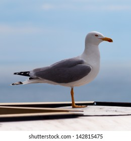 Large seagull on a background of blue sky