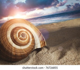 Large seashell in the sand at sunset