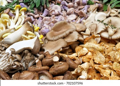 Large selction of edible mushrooms on market stall