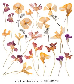 A large set of spring dried and pressed flowers. Herbarium of beautiful multi-colored flowers on white background.