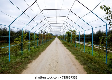 A large shed is a gazebo made of metal rods along a dirt road. Roadside gazebo made of steel for grapes. Blue grapes