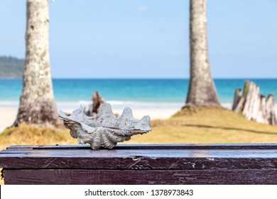 Large shells used as ashtray at Koh Kood Island in Trat province of Thailand.A creative idea to re-use the items.Background is blurr of sea view.
