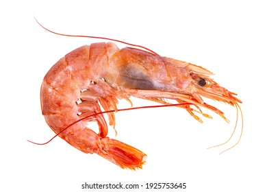 Large shrimp on a white background, isolate, top view.