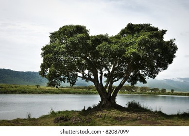 A large single tree on the water's edge of a lake in Tanzania