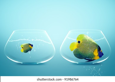 Large and small angelfish,conceptual image for diet, fat.