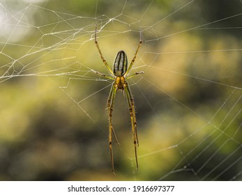 Large spider. Close up macro shot of a spider in her web with see-through body - Shutterstock ID 1916697377