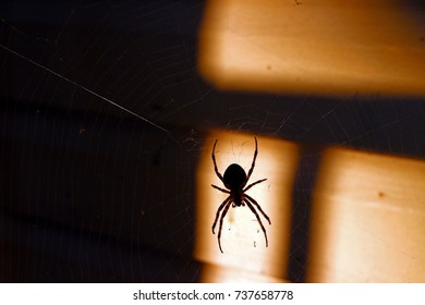 Large spider lighted by Sunlight hanging down near wall, shadows in background.