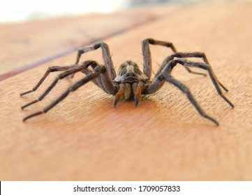 large spider on a deck