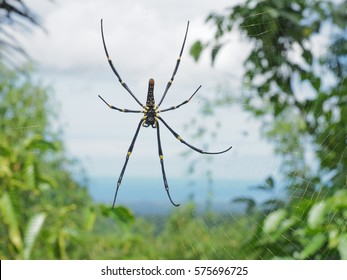Large spider in web on a natural background