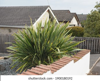 a large spikey yucca type plant in a front garden in a bed of shale