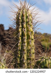 a large spiky cactus