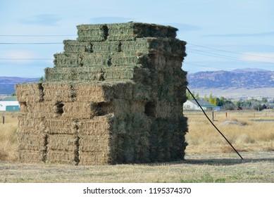 Large stack of square bales awaiting distribution.