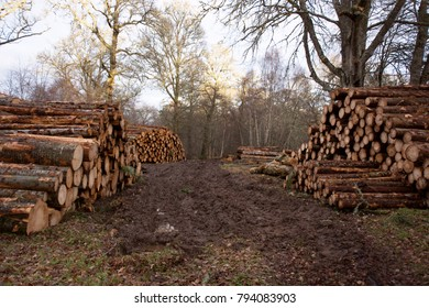 Large stacks of trees cut into logs as part of a forestry operation in a woodland opening