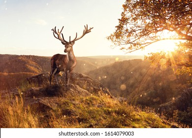 A large stag with a magnificent set of Antlers in a Golden sunset on a cliff