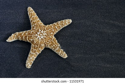 large starfish on black sand with copy-space
