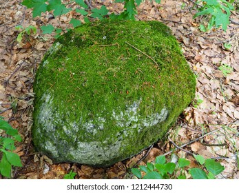 A large stone in the forest covered with moss