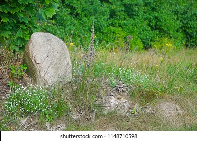 A large stone stands in the backyard in the garden