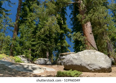 Large stones in the fir forest