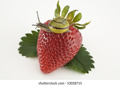 Large strawberry with leaves and snail