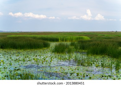 Large swamp with view of city, thickets of grass, water lilies, a city view of reservoir, landscape