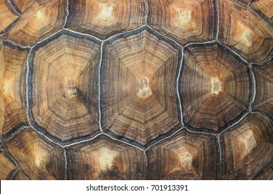 Large tortoise shell