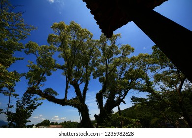 A large tree against blue sky