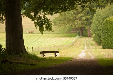 Large tree with bench underneath