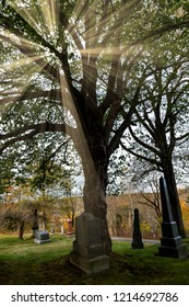 A large tree in a cemetery with sun rays shining through. Grave markers under the tree.