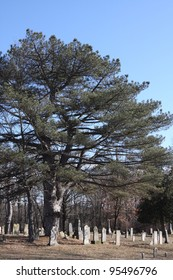 A large tree in the center of a cemetery in Plymouth Indiana