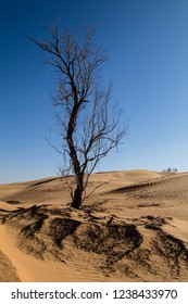 Large tree emerging from the sand in the Sahara desert in Tunisia