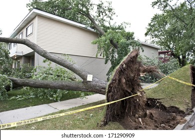 A large tree fell over onto a home after a wind storm.