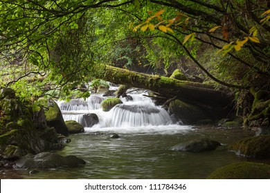 Large tree in the forest and river