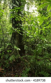 Large tree in green tropical forest