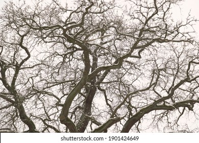 a large tree with many branches is covered with snow