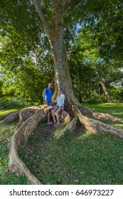 Large Tree in Mauritius SSR Botanical Garden - Pamplemousses